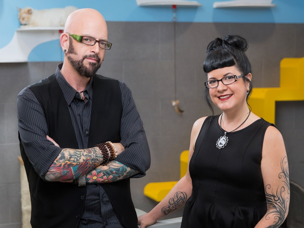 What are jackson galaxy 39 s tips for cats and christmas for Jackson galaxy